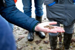Visite guidée parcs à huîtres